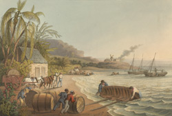 Carting And Putting Sugar-hogsheads On Board, Antigua